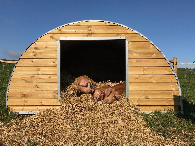 Symondsbury Estate Pigs